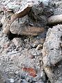 Aushub per Bagger 1m Alter St. Nikolai-Friedhof Nikolaikapelle Hannover, 12 Gebeine 3.JPG