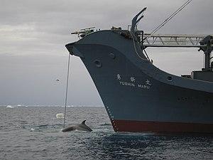 AustralianCustoms-WhalingInTheSouthernOcean 2.jpg