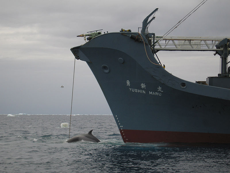 File:AustralianCustoms-WhalingInTheSouthernOcean 2.jpg