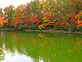 Autumn-lake-reflection - West Virginia - ForestWander.jpg