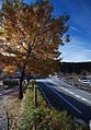 Autumn Foliage in Japan (4120768473).jpg