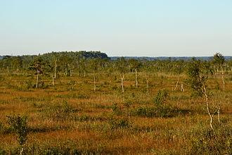 Fen - Image: Avaste soo põhjaosa vaated (5)
