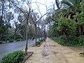 Avenida de Pizarro.JPG