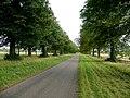 Avenue at Welbeck - geograph.org.uk - 1480227.jpg