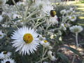 BCBG Flowers 11.JPG