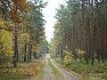 BRZEZINY - PIECZYSKA 13 - panoramio.jpg