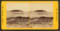 Bald Porcupine, Mt. Desert, by B. Bradley.png