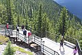 Banff Sulphur Mountain IMG 4190.JPG