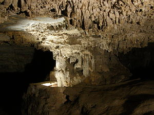 Penna River - Banyan Tree formation inside Belum Caves