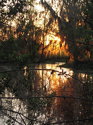 Jean Lafitte National Historical Park and Preserve - Sunset in Barataria Preserve, Louisiana