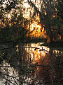 Barataria Preserve Louisiana Sunset.jpg
