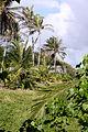 Bathsheba, Barbados 40.jpg