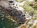 Beach cleanup in Athinios.jpg