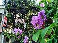 Beauty of flowery.jpg