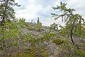 Bedrock slope with taiga, Yellowknife, NT.jpg