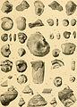 Beiträge zur Paläontologie und Geologie Österreich-Ungarns und des Orients - Mitteilungen des Geologischen und Paläontologischen Institutes der Universität Wien (1907) (20177163049).jpg