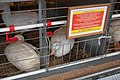 Belagro-2019 (poultry) 002.jpg