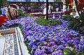 Bellagio Conservatory and Botanical Gardens (9464532836).jpg