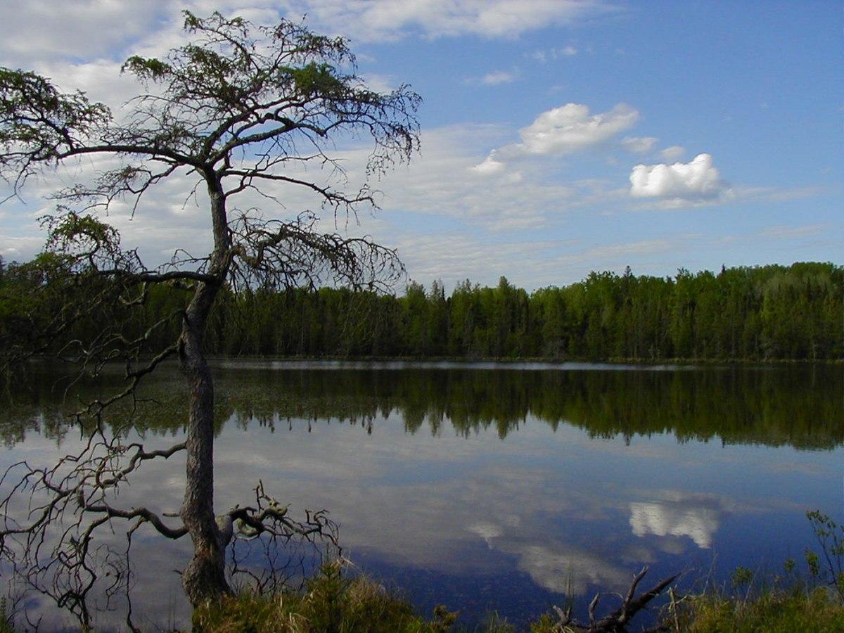 Lake Bemidji State Park - Wikipedia