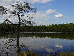 Lake Bemidji State Park - An open-water bog in the north half of Lake Bemidji State Park