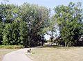 Berczy village markham trees.jpg