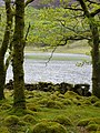 Between the trees - Llyn Cwm Bychan - May 2013 - panoramio.jpg
