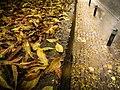 Bir Kasım Günü - Day From November - panoramio.jpg
