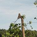 Bird 4 (16955275042).jpg