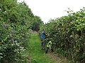 Blackberry picking at Crossness - geograph.org.uk - 936096.jpg