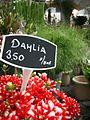 Bloemenmarkt 2006 (8).jpg