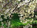 Blossoms 6.jpg