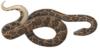 Boa Iconographia Zoologica white background