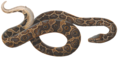 Boa Iconographia Zoologica white background.tif