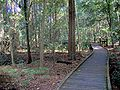Boardwalk Wingham Brush.jpg