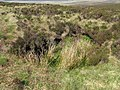 Bog hole on the side of Mid Hill - geograph.org.uk - 800053.jpg