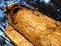 Bosc de Can Deu el 2004 16.jpg