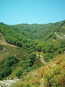 Pineta dei Peloritani in territorio di Mili San Pietro, nel Comune di Messina.
