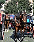 Botticelle, typical horse drawn carriages in Rome.jpg