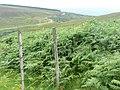 Bracken jungle - geograph.org.uk - 1426440.jpg