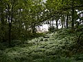 Bracken on Loch Katrine Shores - geograph.org.uk - 219077.jpg