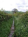 Bridleway between Aislaby and Briggswath - geograph.org.uk - 804711.jpg