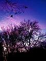 Bright goodnight - Flickr - katmeresin.jpg