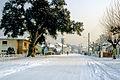Brocas sous la neige 30.jpg