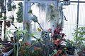 Bromeliaceae III.jpg