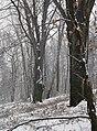 Buk - panoramio (2).jpg