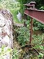 Bussang-les-Sources etang Sechenat 20070707 FRA Vosges Misson Didier.JPG