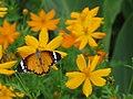 Butterfly (4849532564).jpg
