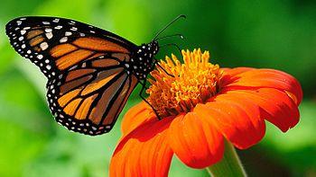 Butterfly - Copy.jpg