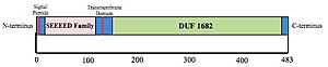 CCDC47 - The CCDC47 protein construct, including the signal peptide, SEEEED superfamily, transmembrane domain and DUF1682.