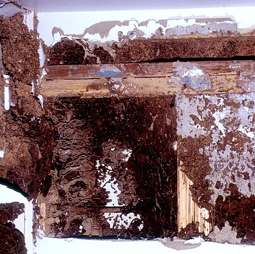 earthen molds and mud tunnels on wooden wall